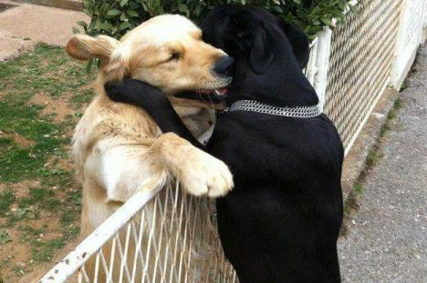Dog's Hugging Over the Fence photo found on mashable.com