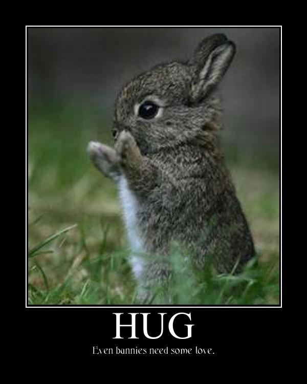 Funny Applause Meme : Cute animal hug imgkid the image kid has it