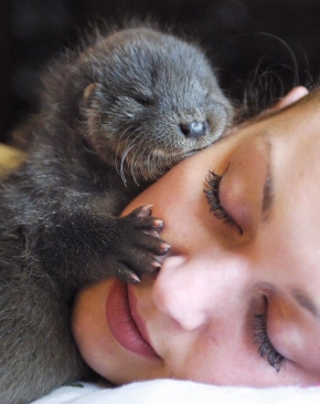 hugs, otter hugs, otter sleeping on face, buzzfeed, one hug a day